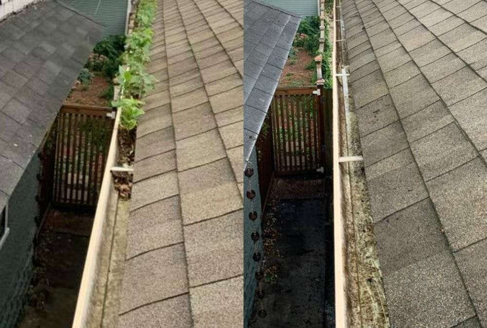expert gutter cleaning MN